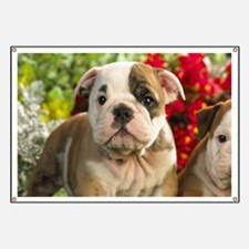 Cute English Bulldog Puppy Banner