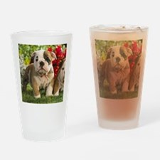 Cute English Bulldog Puppy Drinking Glass