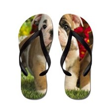 Cute English Bulldog Puppy Flip Flops
