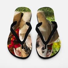 Cute English Bulldog Puppy Flip Flops