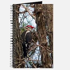Male Pileated Woodpecker Journal