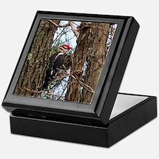 Male Pileated Woodpecker Keepsake Box
