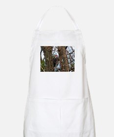 Male Pileated Woodpecker Apron