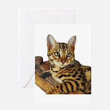 Bengal Kitten (2) Greeting Card