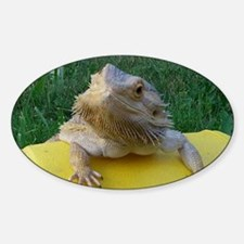 Funny Bearded dragon Decal