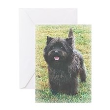 Cute Scottish terriers Greeting Card