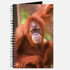Unique Orangutan Journal