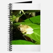 Coqui Journal