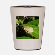 Coqui Shot Glass