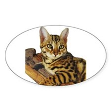 Bengal Kitten (2) Oval Decal