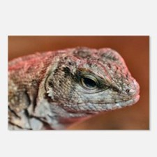 Cute Bearded dragons Postcards (Package of 8)