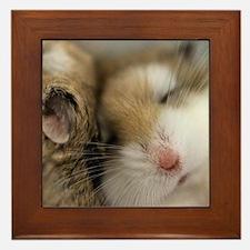 Cute Hamsters Framed Tile