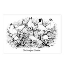 Shortface Tumbler Pigeons Postcards (Package of 8)