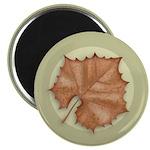 """Sycamore Leaf 2.25"""" Magnet (100 pack)"""
