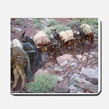 South Kiabab Grand Canyon Mule Ride Pack Mousepad