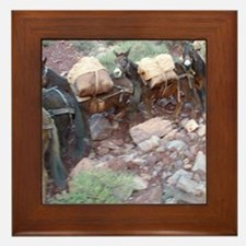 South Kiabab Grand Canyon Mule Ride Pa Framed Tile