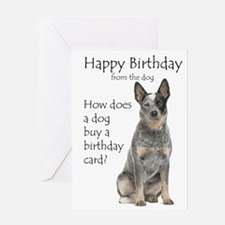 Australian Cattle Dog Birthday Greeting Cards