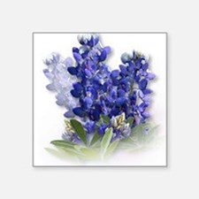 "Funny Bluebonnet Square Sticker 3"" x 3"""