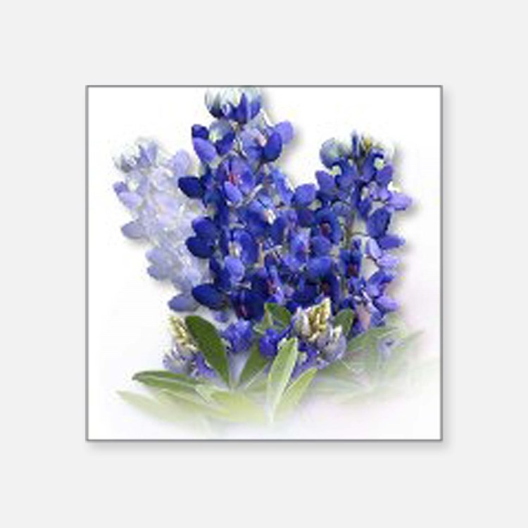 "Cute Texas wildflower Square Sticker 3"" x 3"""