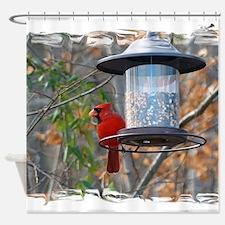 Male Cardinal Shower Curtain