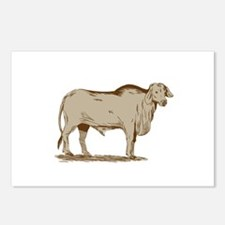 Brahman Bull Drawing Postcards (Package of 8)