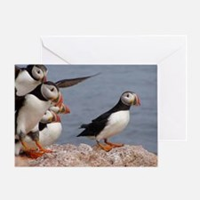 Puffins Photo Cards Greeting Cards