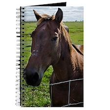 Cute Florida cracker horse Journal