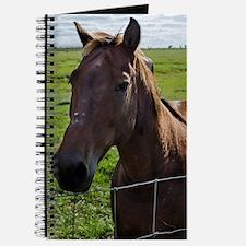 Cute Florida horse Journal