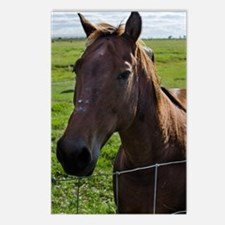 Cute Florida horse Postcards (Package of 8)