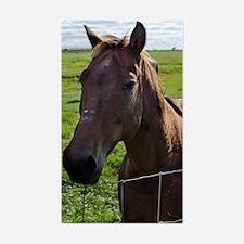 Cute Florida horse Decal