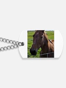 Funny Florida horse Dog Tags