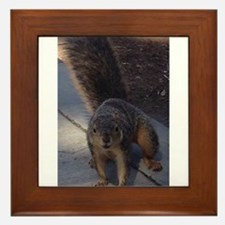 Squirrelin' Around Framed Tile
