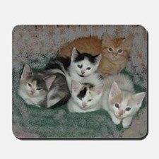 Lots of Kittens Mousepad