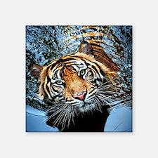 Tiger in Water Sticker