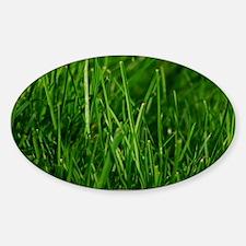 GREEN GRASS Decal