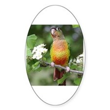 Unique Green cheek conure Decal