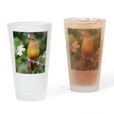 Green cheeked conures Drinking Glass