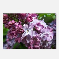 """ Purple Lilacs "" Postcards (Package of 8)"