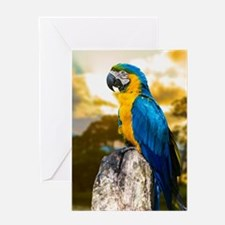Beautiful Blue And Yellow Parrot Greeting Cards