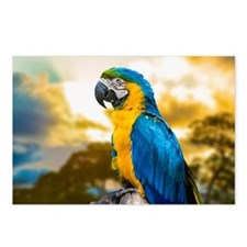 Beautiful Blue And Yellow Parrot Postcards (Packag