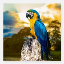 Beautiful Blue And Yellow Parrot Square Car Magnet