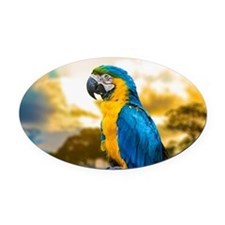 Beautiful Blue And Yellow Parrot Oval Car Magnet
