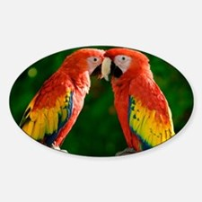 Beautiful Parrots Decal
