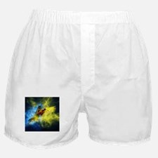 Beautiful Parrot Boxer Shorts