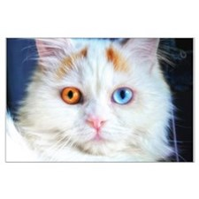 Odd-Eyed White Cat Large Poster