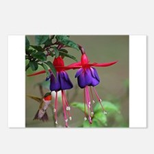Fuchsia and Hummingbird Postcards (Package of 8)