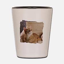 Loki In Basket 1 Shot Glass