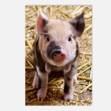 Cute Piglet Postcards (Package of 8)
