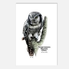 Northern Hawk Owl Postcards (Package of 8)