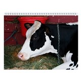 Cow Calendars